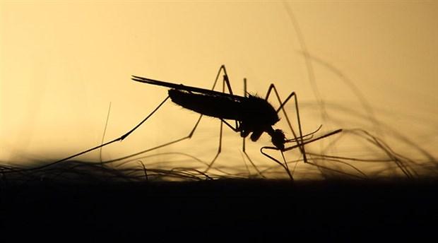 Sivrisinekler de Üreme