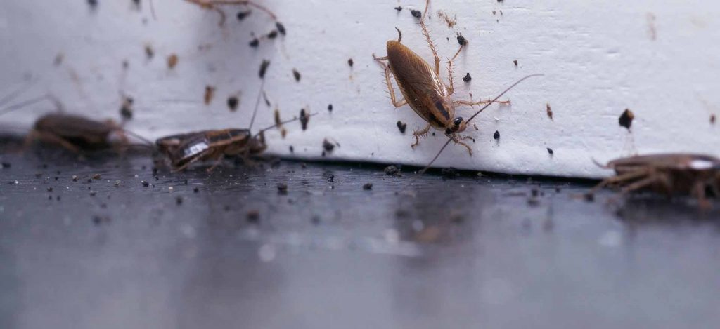 hamam böceği ilaçlama şirketi