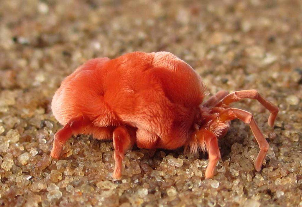 kırmızı örümcek ilaçlama