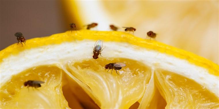 meyve sineği ilaçlama