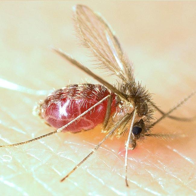 tatarcık sineği ilaçlama