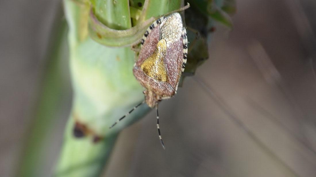 kalkan böceği mücadelesi
