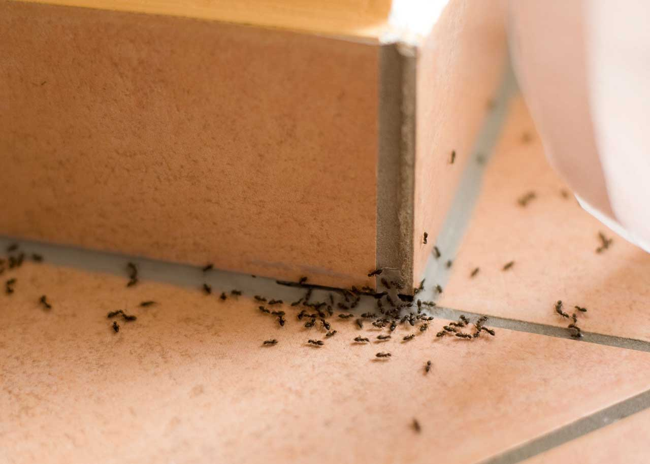 karınca ilaçlama uygulamaları