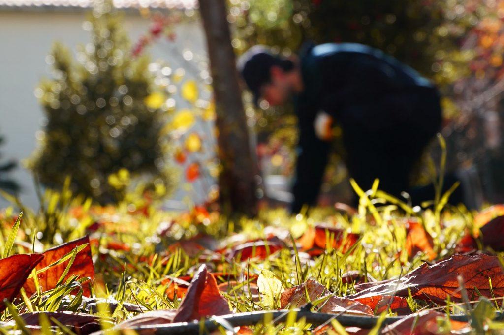 sonbaharda böcek ilaçlama