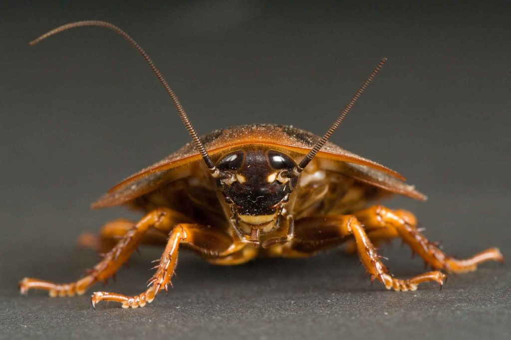 hamam böceği ilaçlama firması